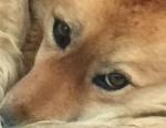 guérison chien