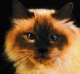 Magnétiseur Guérisseur Jacques. Soin pour nos amis les chats.