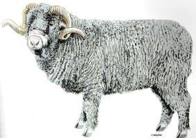 Magnétiseur pour les moutons Jacques